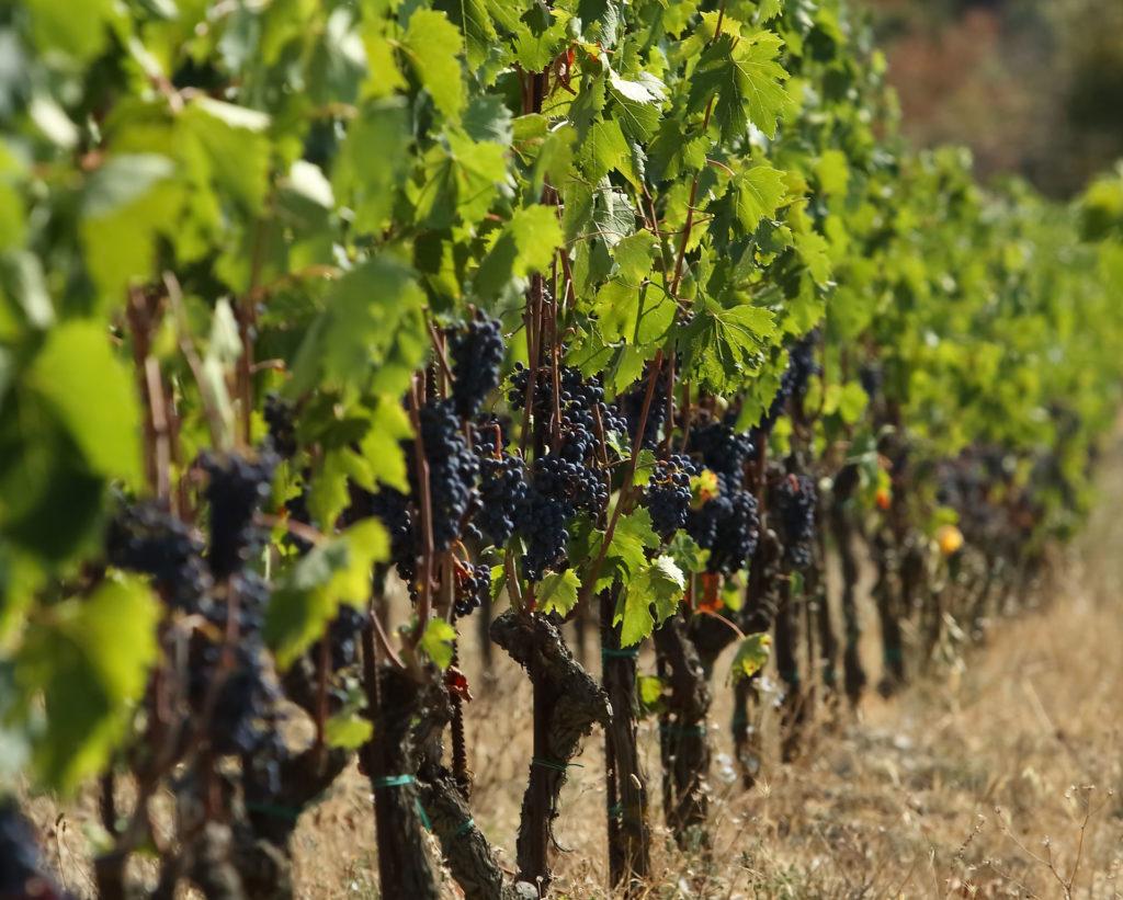 Vignobles-de-Chianti