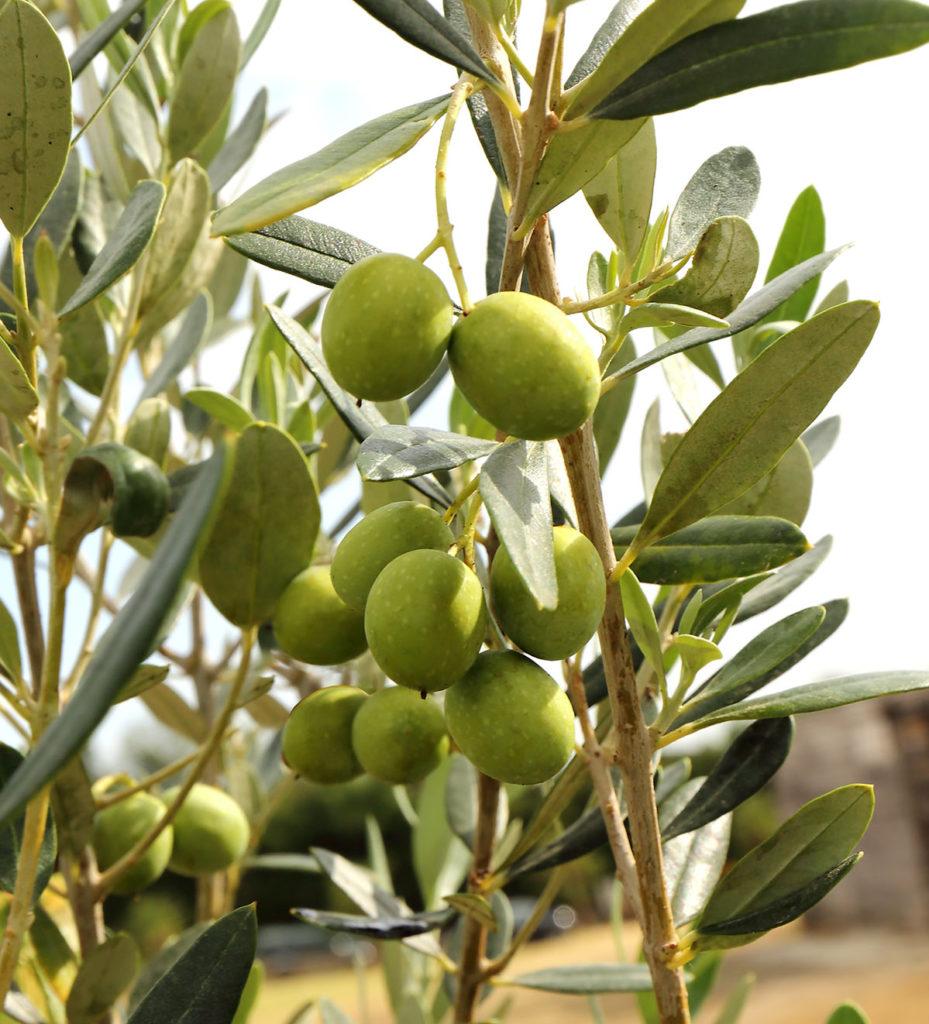 olivier toscane