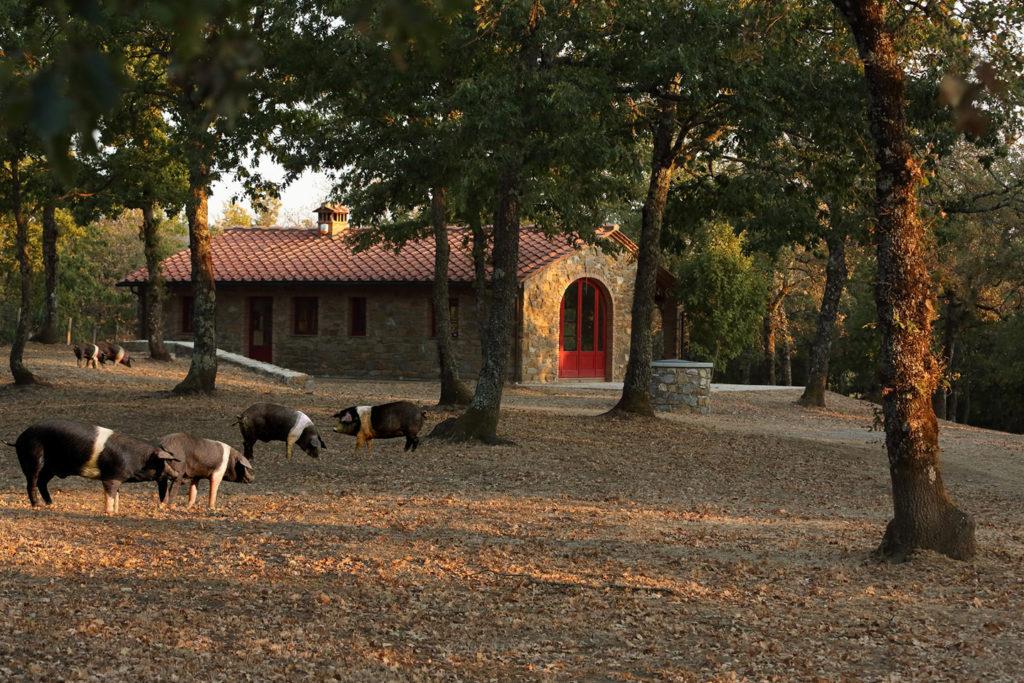 La cabane et l'élevage en plein air à Gaiole in Chianti